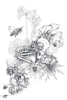 Stephanie E. Graham - Bird Skull Floral Pen on Paper, Drawings