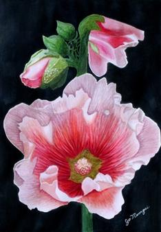 Josie Mengai - Pink Flowers Digital Print on Aluminum, Prints