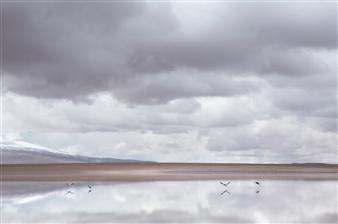David Wile - Flamingo Photograph on Fine Art Paper, Photography