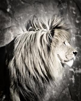 Bree Castillau - Pride Rock King Digital Photography, Photography