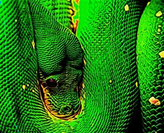 Howard Harris - Snake Digital Print on Aluminum, Digital Art