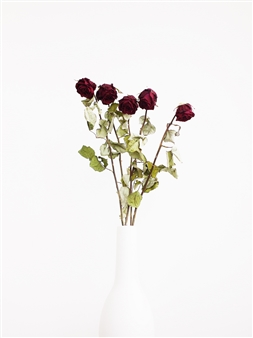 Steven Anggrek - Withered Roses In a White Vase III Photograph on Hahnemühle Paper, Photography