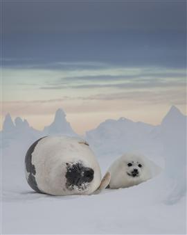 Ellen Cuylaerts - Mom & Pup Photograph on Fine Art Paper, Photography