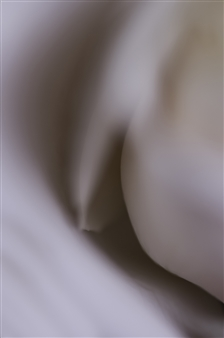 Kathleen Messmer - Spooning Photograph on Aluminum, Photography