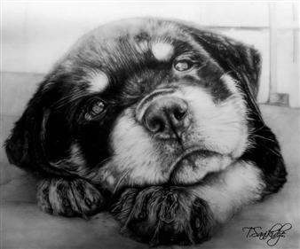 Tiko Sanikidze - A Little Berni Pencil on Paper, Drawings