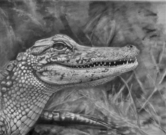 Dino Rinaldi - Alligator Graphite on Paper, Drawings