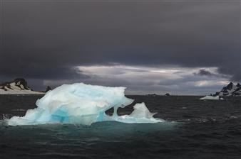 Olga Loschinina - The Ice Wolf Photograph on Plexiglass, Photography