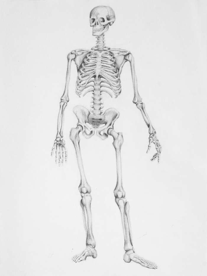 La anatomía artística