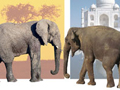 Elephant Differences