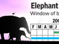 Elephant Breeding Timeline