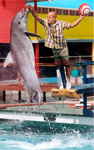 Bob Jenni, who was director of the Springlake Sea Aquarium, engaged Konki the porpoise in a little poolside training more than 40 years ago.