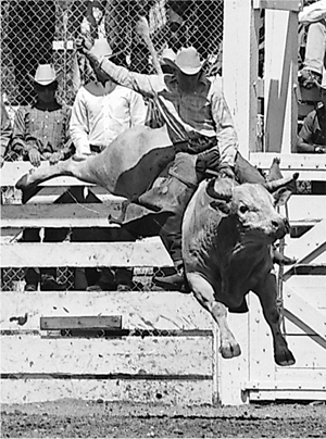 Bull and rider are suspended in air as Freckles Brown holds onto the rope in 1966 in Cheyenne, Wyo.