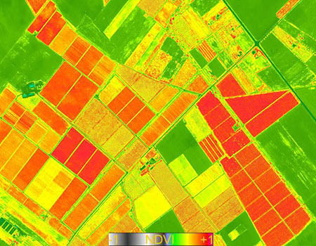 NDVI Satellite Map Agriculture