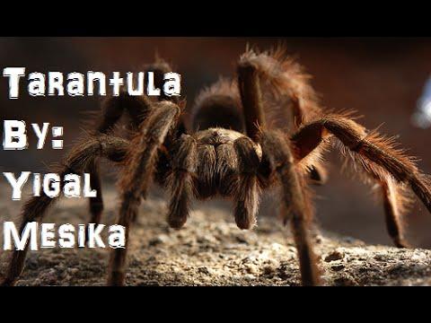 Tarantula By Yigal Mesika Magnetic Money Magic Trick