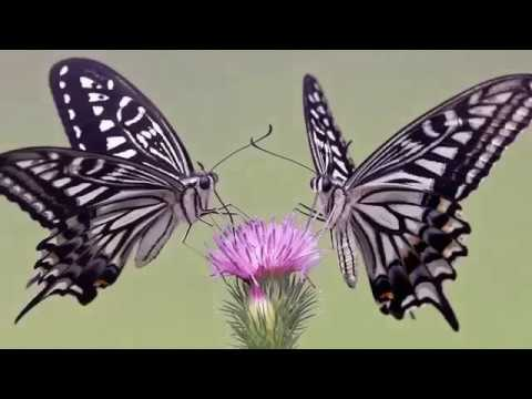 Subtle Magic Rampage LOVE takes care of EVERYTHING! , Law Of Attraction, Abraham Hicks, 2016