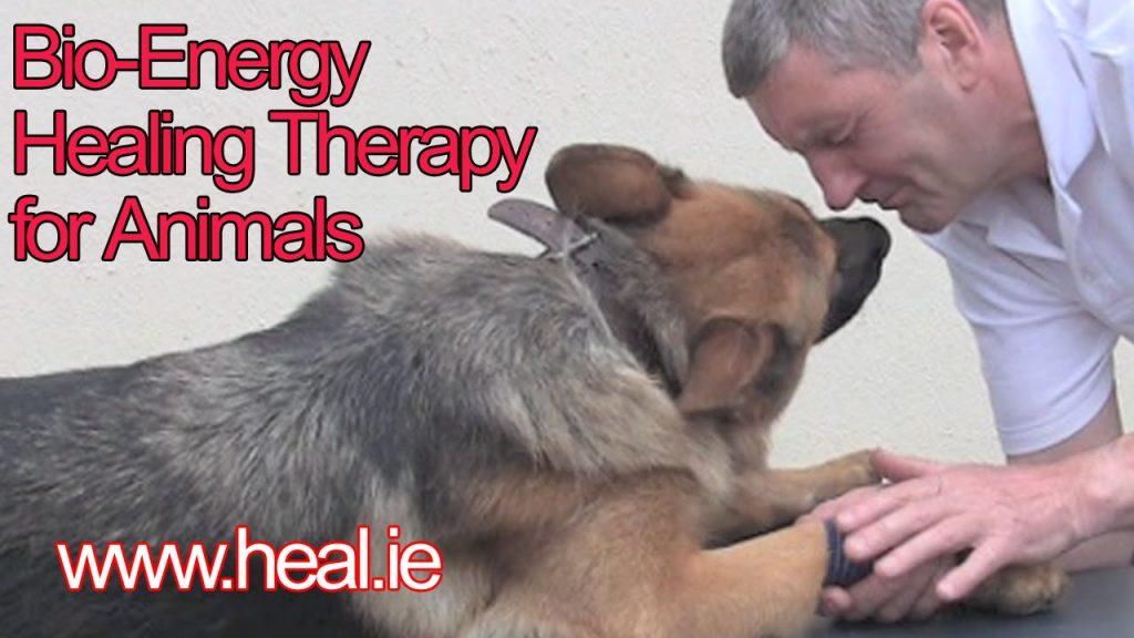 Energy Healing on Animals