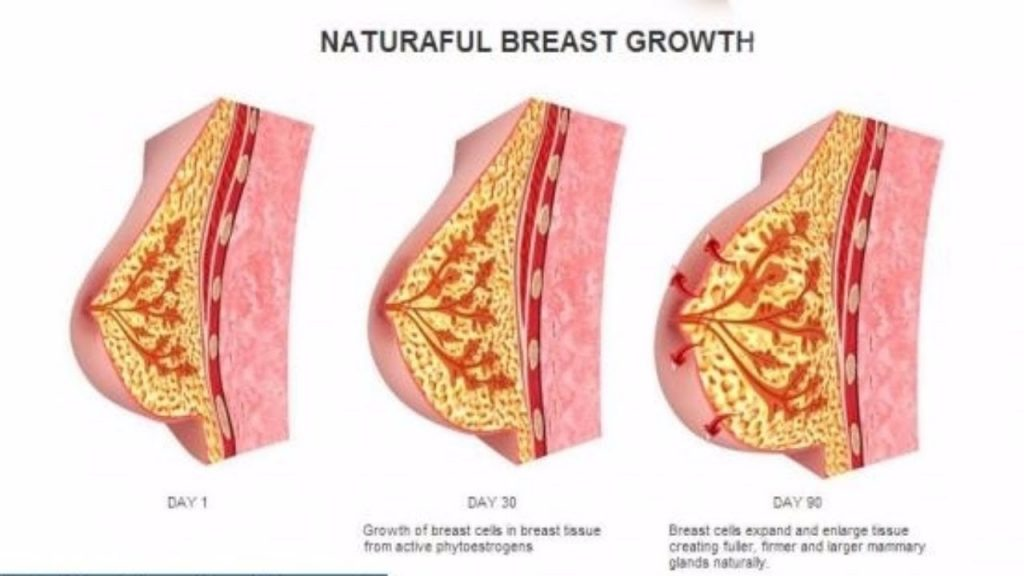 Breast Enlargement Naturally | Health And Nutrition