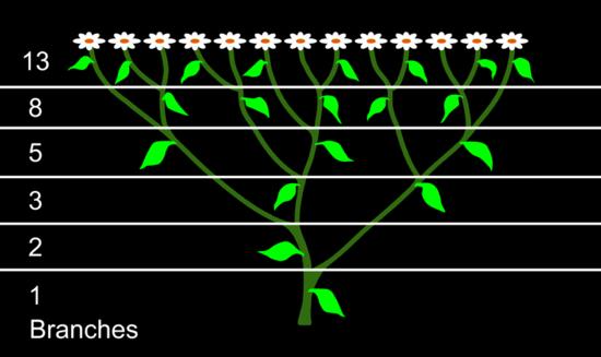 Phi Quantities And Fibonacci Numbers
