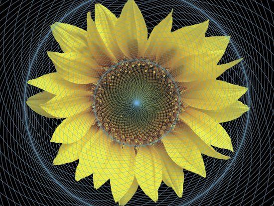 La cosmométrie, fondement géométrique de la physique et de la métaphysique Sunflower