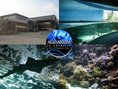 Aquarium_rochelle2_article