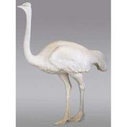 Bird - Ostrich | Fiberglass Animal