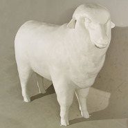 Sheep - Large Merino | Fiberglass Animal