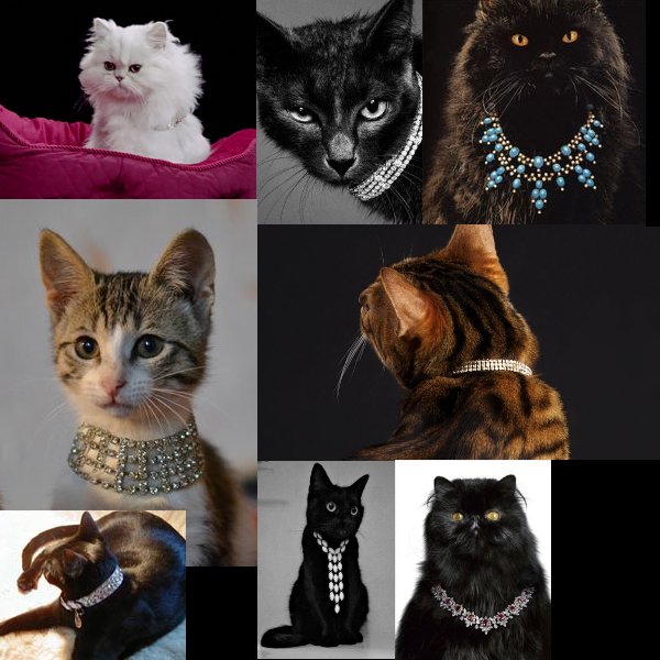 cats-with-diamond-collars