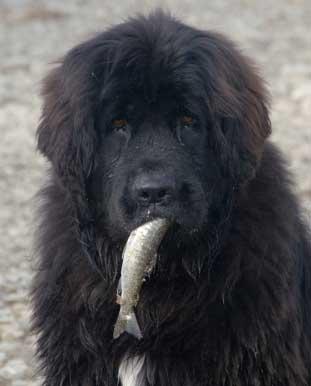 fishingdog