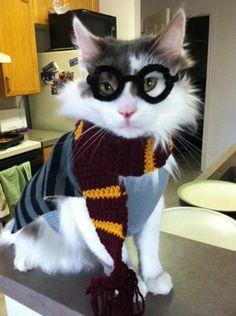 harry-potter-cat