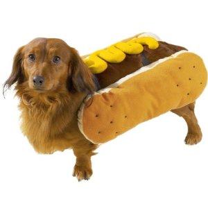 hot-dog-dog