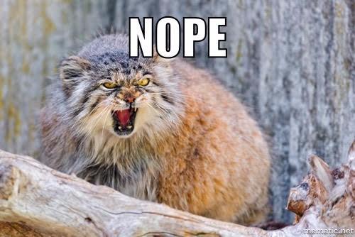 nope-angry-bobcat