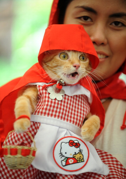 red-riding-hoot-cat