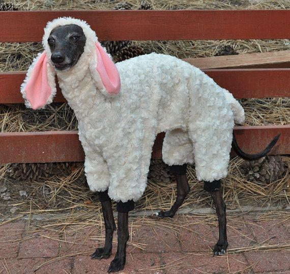 sheep-dog