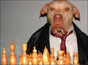 Mobster Dog says: Checkmate