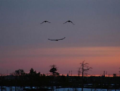 smiling-birds