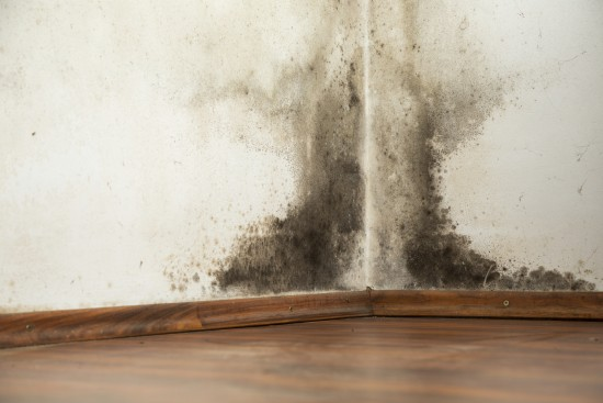 Mold in the corner of a home/office