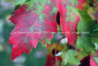 A closeup of a leaf on a tree that is changing from green to red as it is autumn.