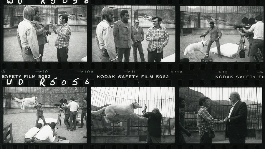 Film_strip_1_large