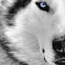 Copertina wolf 2 0