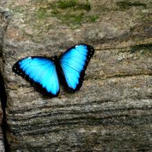 Butterfly by shahar12 d47zxrn 2 0