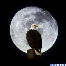 Aquila e luna 3 0