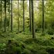 Bg green woods by eirian stock