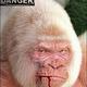 Scimmia albina