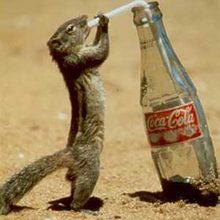 Coca cola scoiattolo