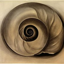 Georgia okeefe the shell 1934 artchive