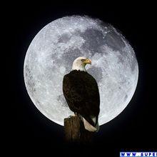 Aquila e luna
