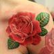 Rosa tattoo5