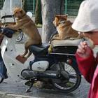 Dogsriding