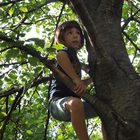 Incontri sugli alberi