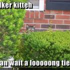 Funny pictures stalker cat will wait for you